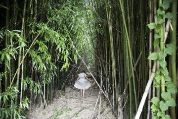Bamboo Forest, Shelter Island, by Bastienne Schmidt