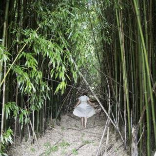 Bamboo Forest, Shelter Island art for sale