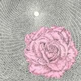 Butt Johnson, Untitled (Rose/Cycloid)