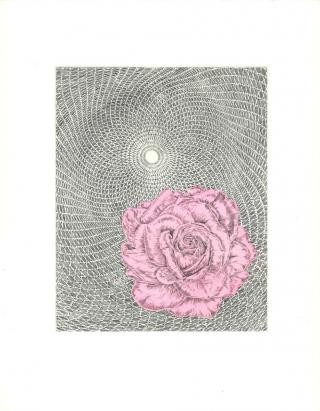 Untitled (Rose/Cycloid), by Butt Johnson