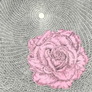 Untitled (Rose/Cycloid) art for sale