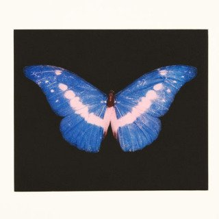 Damien Hirst, To Belong