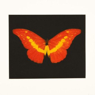 Damien Hirst, To Love