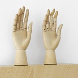 Haim Steinbach, Untitled (female mannequin right hands)