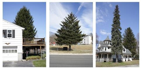 Untitled (from Every Tree in Town), Set of 3, by <a href='/site-admin/artists/artist/340'>Matthew Jensen</a>