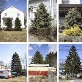 Matthew Jensen, Untitled (from Every Tree in Town), Set of 30