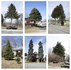 Untitled (from Every Tree in Town), Set of 6, by Matthew Jensen