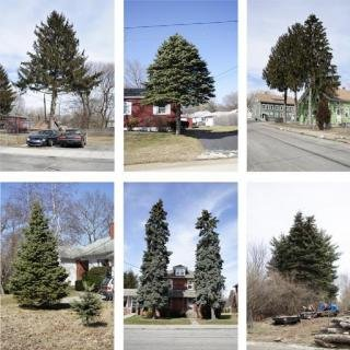 Matthew Jensen, Untitled (from Every Tree in Town), Set of 6