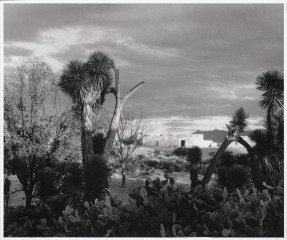 Paul  Strand  Near Saltillo, Mexico, 1932 art for sale