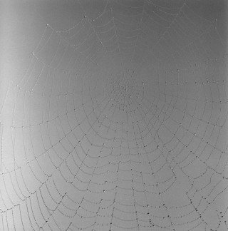 Web #11, by Sally Gall