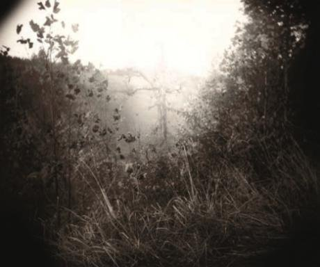 Sally Mann, Untitled
