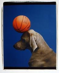 Game, by William Wegman