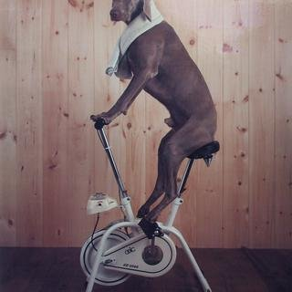 William Wegman - Hunk, Photograph
