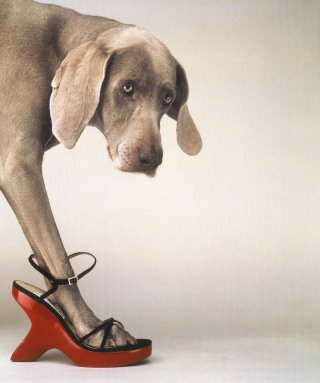 Walk-a-thon, by William Wegman